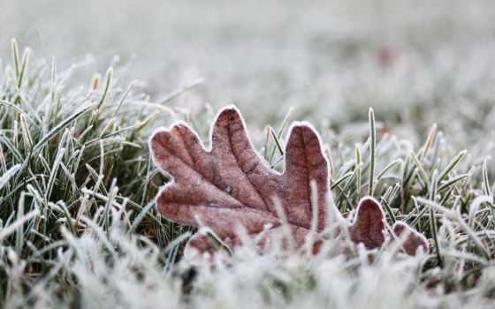 иней, desktop, холодная, листьев, трава, зимняя, макрофотография,