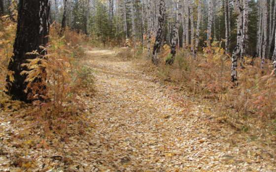 осень, листья, деревья
