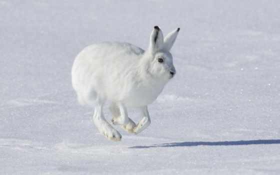 заяц, slide, зайцы,
