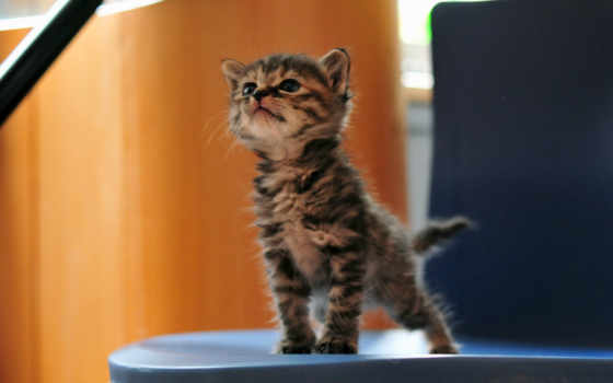 маленьки котик