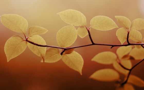 листья, браун, зеленые