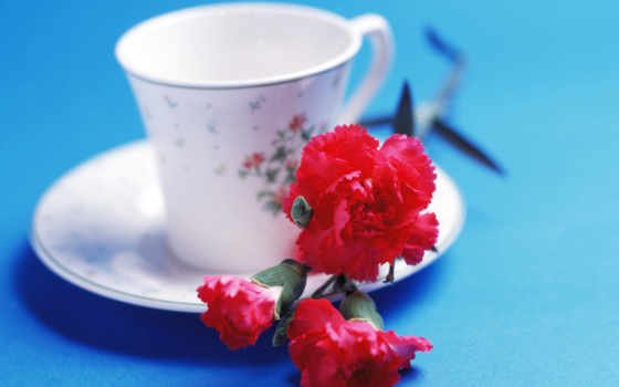 free, flowers, фото