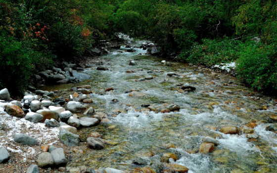 agua, floresta, bosque