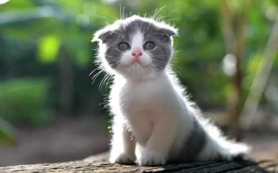 , катенок, ушки, котик, милашка,