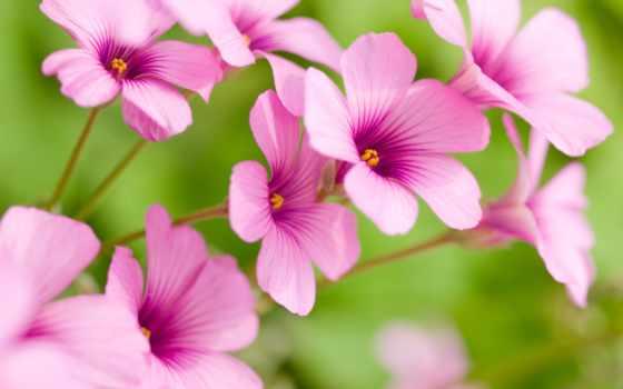 cvety, широкоформатные, красивые, clear,