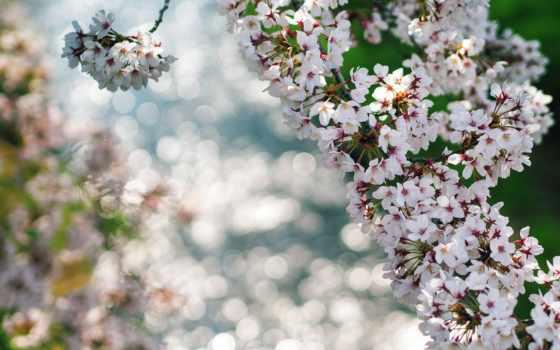 весна, bahor, baxor, season, mavsumi, люся,