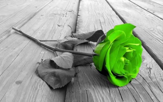 цветы, взлёт, зелёный, color, garden, splash, китаянка, растение