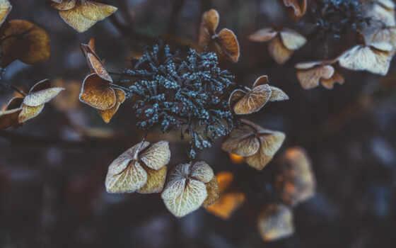 winter, фон, растение, mobile, world, монитор, листва