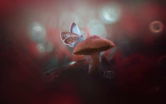 ,гриб, бабочка