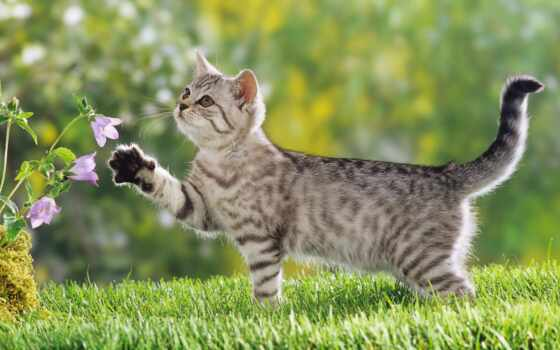 котенок, кот, весна, трава, цветы, папоротник, summer, black