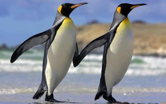 пингвины, смешные, пингвинов