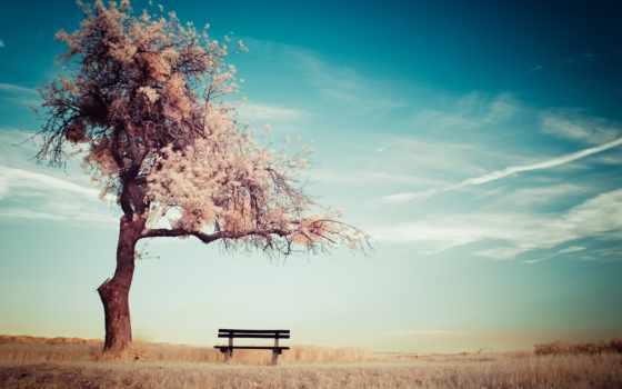 you, небо, дерево
