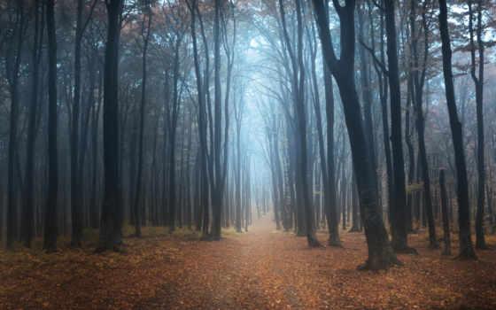 bosque, negro, floresta, por, rboles, туман, niebla, para,