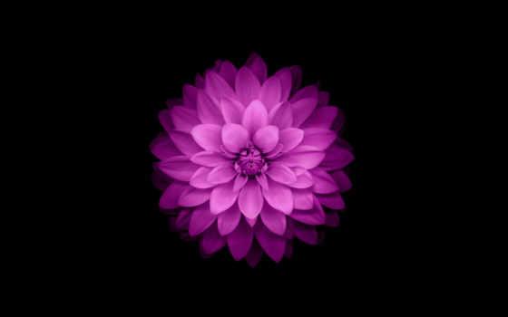 fone, черном, цветы, purple,