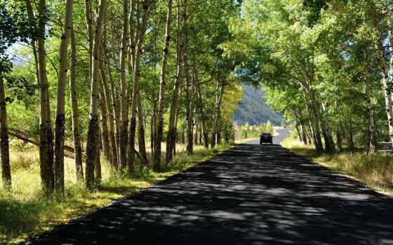 summer, дорога, лес