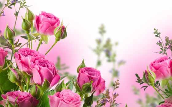 cvety, розы, бутоны, букет, лепестки, розовые, листики,