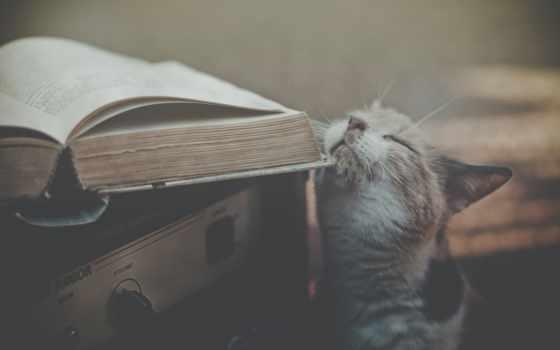 книга, кот, receiver, очки, спит, малыш, книгу,