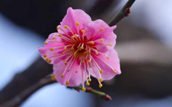 iphone, весна, plus, cvety, макро, sfondi, цветы, цветение,