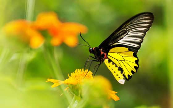 бабочка, living, доставка, ufl, большой, vật, цветотерапия