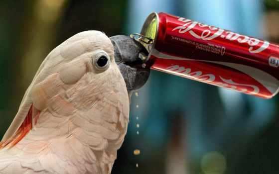 коллекция, кишка, птица, coca, смотреть, user, het, meme, попугай, напиток