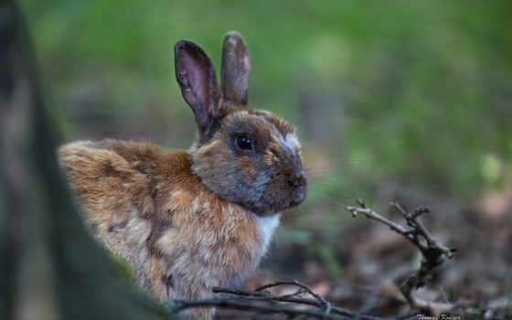 заяц, лес, ветки,
