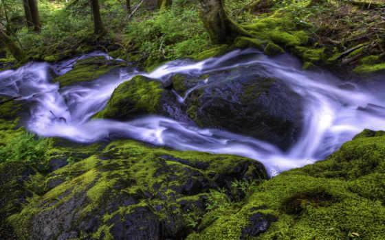 лес, мох, water