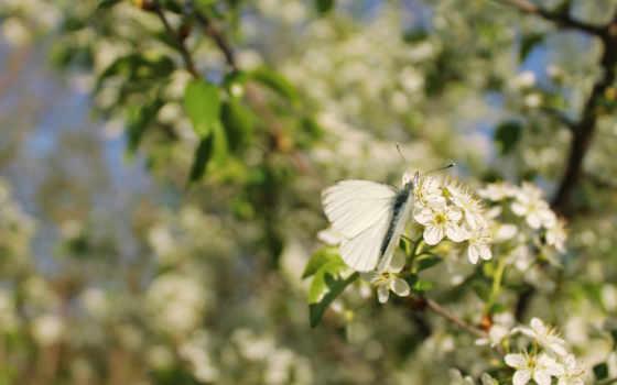 качестве, бабочка, только