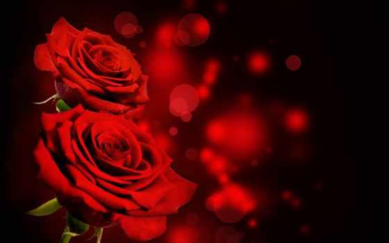 розы, roses, red