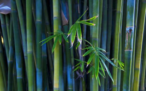 бамбук, листва, стебли, branch, бамбука, взгляд,