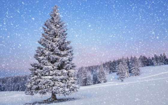 winter, природа, снег, landscape, елка, года, time,