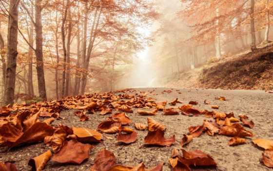 листва, осень, сухие, парке, туман, года, дорожке, осеннем, природа, осенние,