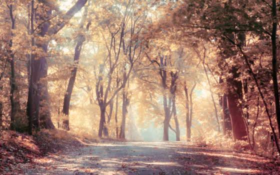 лес, природа, фотообои, дорога, листва, rays, грн, trees, scenic, природы,