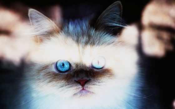 кот, file, you, можно, coated,