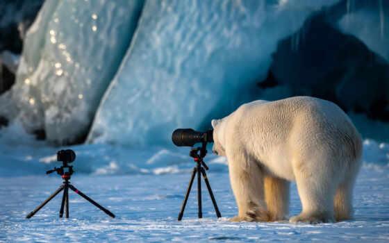 funny, животные, contest, award, animal, комедия, фото, wild, медведь, приз