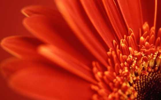 цветы, поле, name