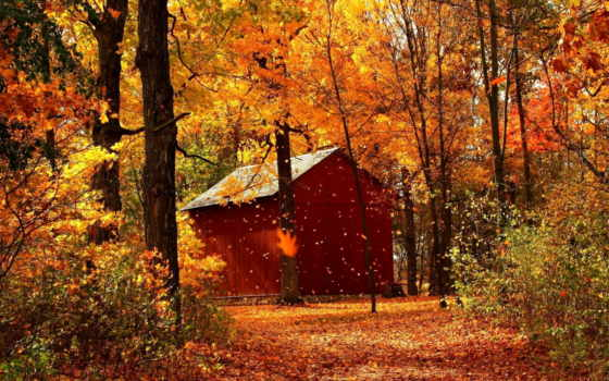 осень, золотая, природа, категория, совершенно,