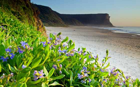 природа, цветы, summer, пляж, прикольные, оружие, море, осень, весна, праздники,