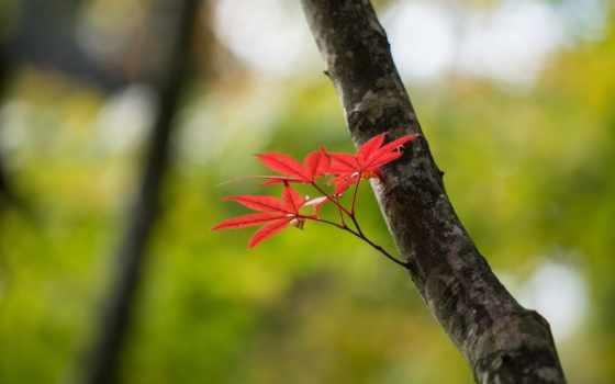 макро, природа, leaf, ultra, images, зелёный, листья,