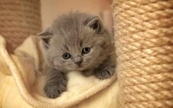 кот, cats, kittens, zhivotnye, desktop, black,
