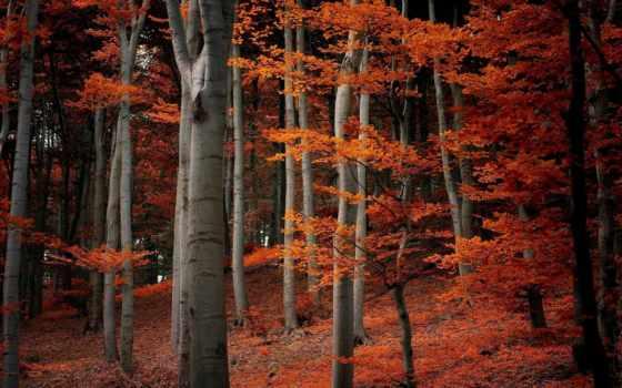 природа, trees, осень, листва, лес,