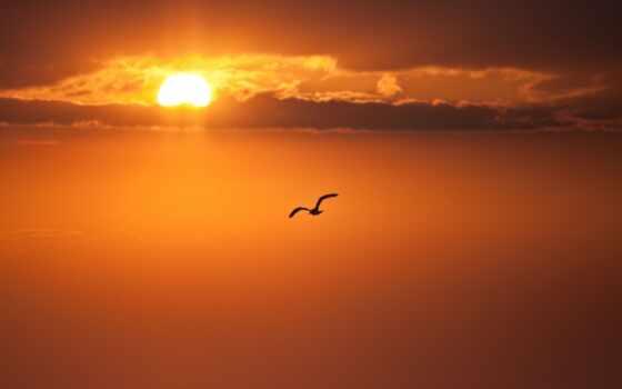 птица, weed, закат, sun, облако, небо, permission, оранжевый, диск