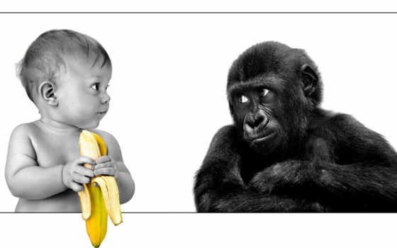 кто так ест банан???