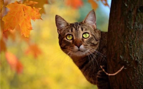 кот, дерево