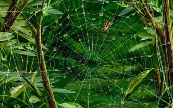 паук, web, паутине
