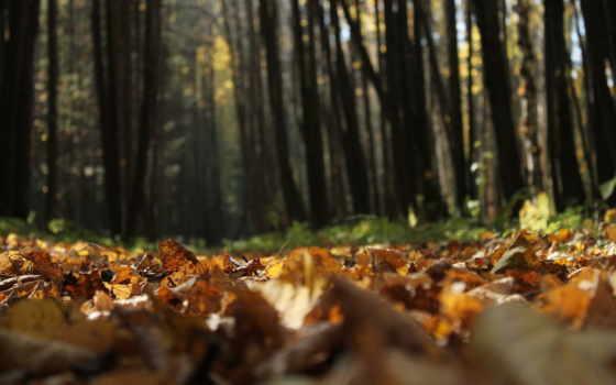mac, лес, осень, мешок, macbook, страница, природа, free,