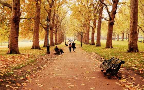 деревья, природа Фон № 33691 разрешение 1920x1200
