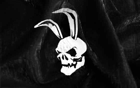 череп, зайца, зайцев