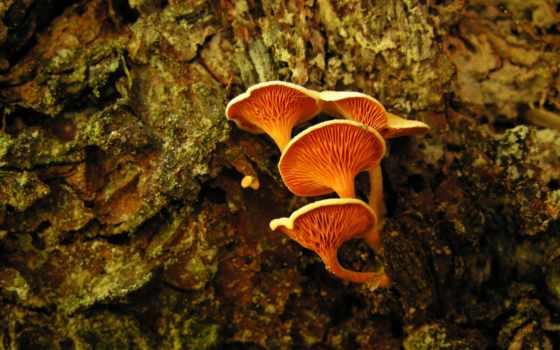 mushrooms, оранжевый, desktop
