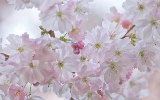 весна, коллекция