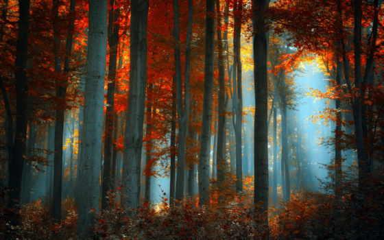лес, landscape, природа, самые, качественные,